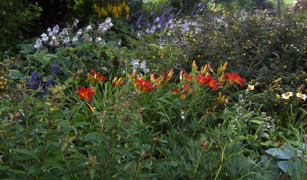 pic_flowers_609